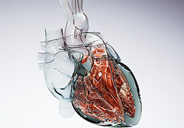 20080625134427-feature-heart.png